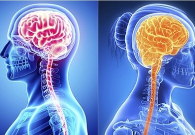 Male and female brains age differently